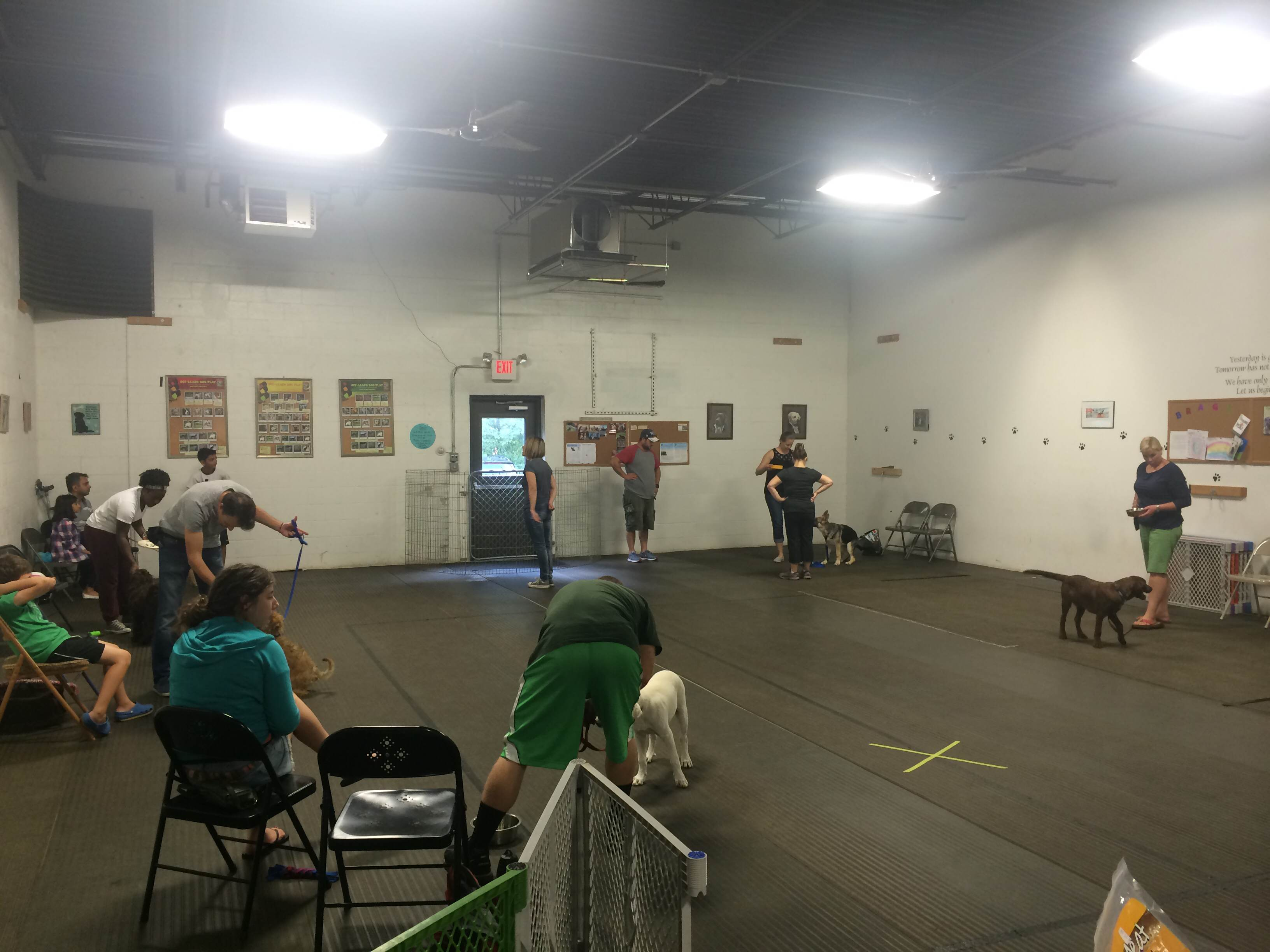 Live from Heavenly Hounds Dog Training!